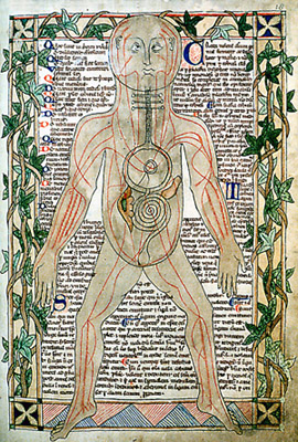 13th_century_anatomical
