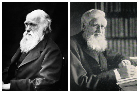 Charles Darwin & Alfred Russel Wallace